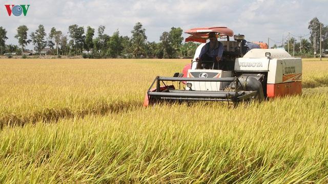Nông dân ĐBSCL phấn khởi vì lúa Đông Xuân trúng mùa được giá - Ảnh 1.