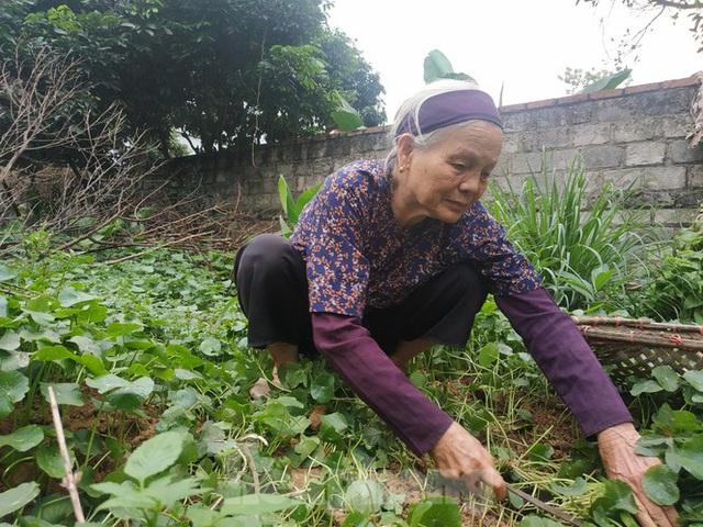 Cụ bà bán rau 79 tuổi ủng hộ tiền chống dịch COVID-19 - Ảnh 1.