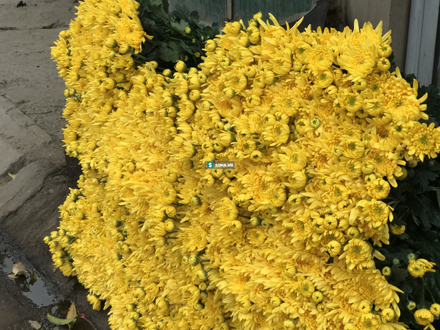 """Làng hoa lớn nhất Hà Nội ủ rũ vì Covid-19: """"Chắc phải bán đất để bù lỗ - Ảnh 13."""
