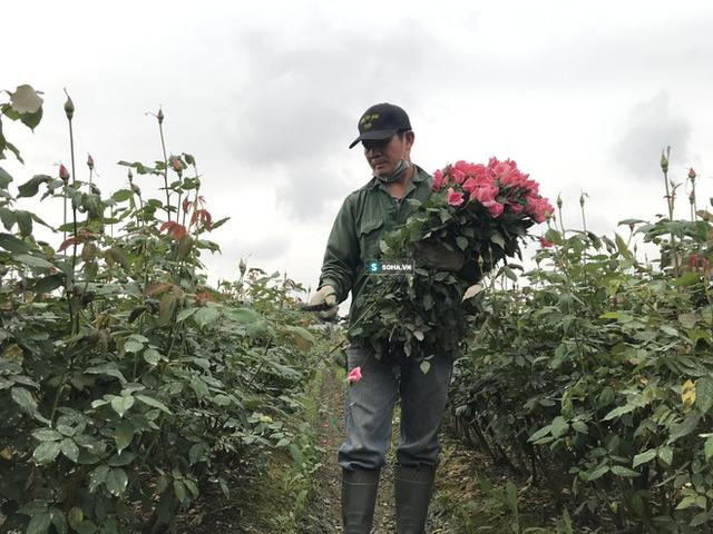 """Làng hoa lớn nhất Hà Nội ủ rũ vì Covid-19: """"Chắc phải bán đất để bù lỗ - Ảnh 9."""