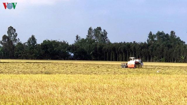 Người trồng lúa Hậu Giang có thu nhập từ 25-50 triệu đồng/ha - Ảnh 1.