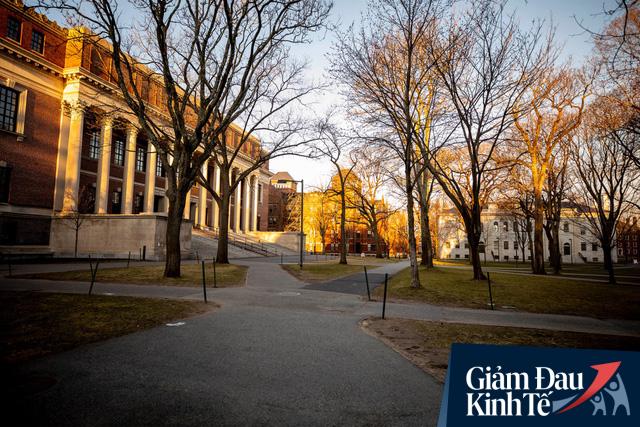 Mỹ: Từ Ivy League cho đến các trường đại học công cùng chung một nỗi lo - sinh viên sẽ không quay trở lại sau khi đại dịch kết thúc - Ảnh 2.
