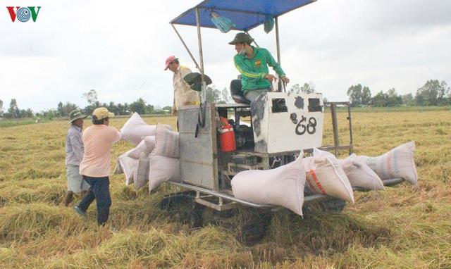 Giải pháp nào để gỡ khó cho doanh nghiệp xuất khẩu gạo - Ảnh 1.