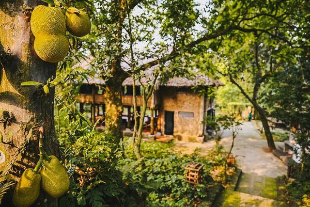 Mê mẩn khu nhà trên núi có ao đầy cá, vườn trĩu quả - Ảnh 18.