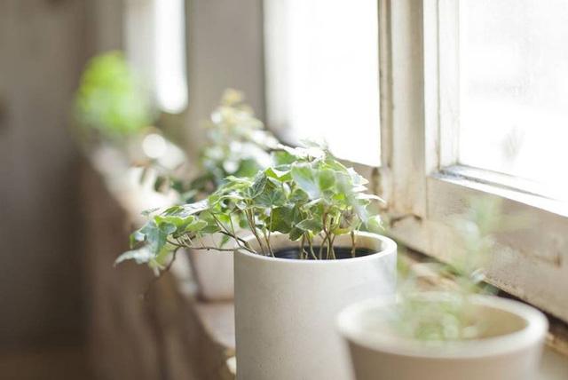 5 lợi ích sức khỏe vô giá khi trồng cây trong nhà: Muốn khỏe mạnh hãy sớm dựa vào cây! - Ảnh 4.
