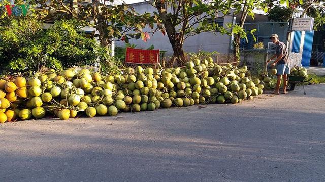 Ảnh hưởng dịch Covid-19, giá dừa Xiêm giảm 30% - Ảnh 1.