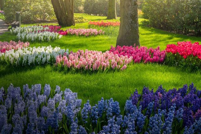 Thiên đường hoa đẹp nhất thế giới không bóng người vì dịch Covid-19 - Ảnh 11.