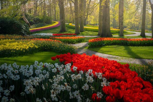 Thiên đường hoa đẹp nhất thế giới không bóng người vì dịch Covid-19 - Ảnh 13.