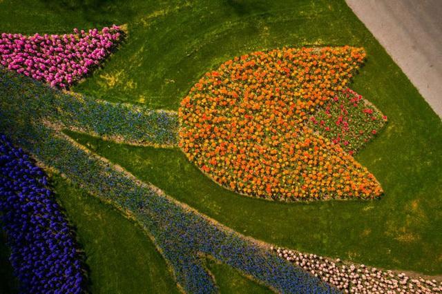 Thiên đường hoa đẹp nhất thế giới không bóng người vì dịch Covid-19 - Ảnh 14.