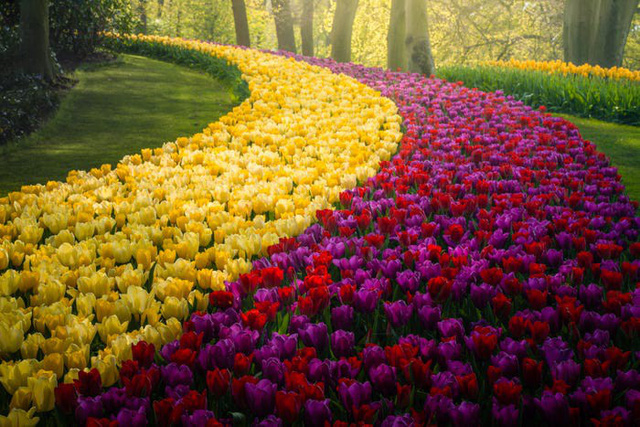 Thiên đường hoa đẹp nhất thế giới không bóng người vì dịch Covid-19 - Ảnh 15.