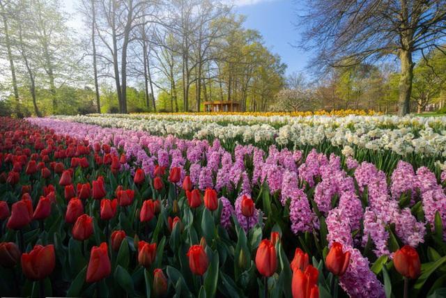Thiên đường hoa đẹp nhất thế giới không bóng người vì dịch Covid-19 - Ảnh 3.