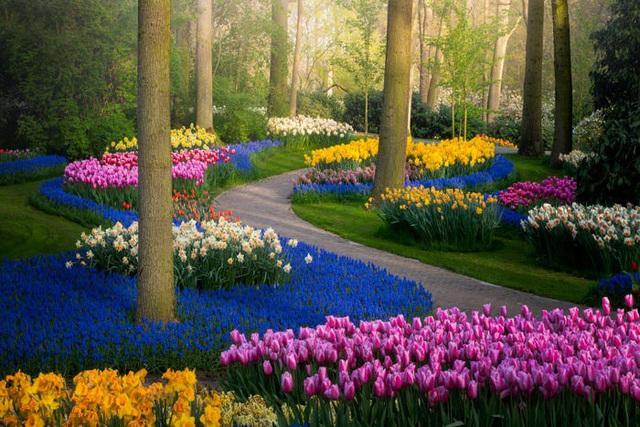 Thiên đường hoa đẹp nhất thế giới không bóng người vì dịch Covid-19 - Ảnh 4.