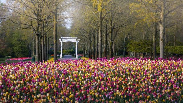 Thiên đường hoa đẹp nhất thế giới không bóng người vì dịch Covid-19 - Ảnh 5.