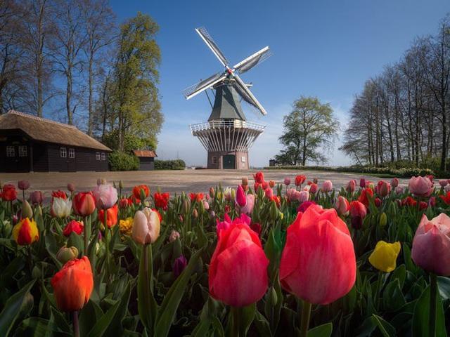Thiên đường hoa đẹp nhất thế giới không bóng người vì dịch Covid-19 - Ảnh 6.