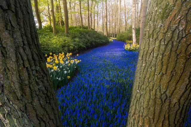 Thiên đường hoa đẹp nhất thế giới không bóng người vì dịch Covid-19 - Ảnh 7.