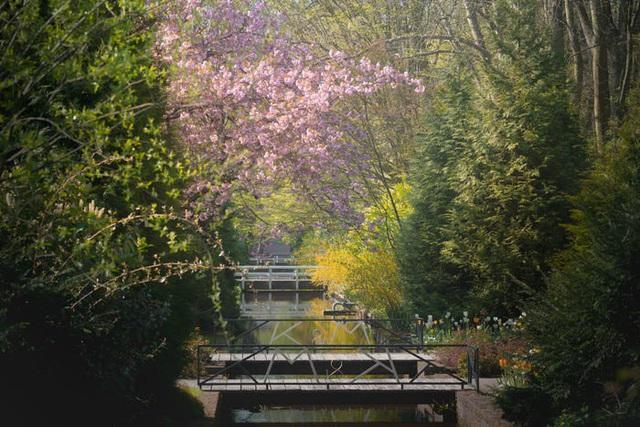 Thiên đường hoa đẹp nhất thế giới không bóng người vì dịch Covid-19 - Ảnh 10.