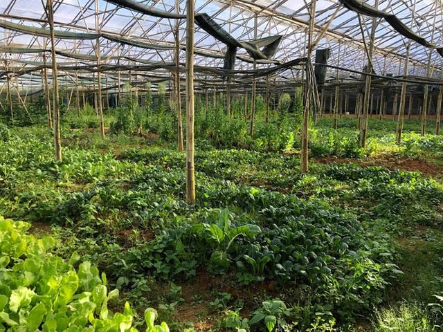 Từ bỏ chức vụ hiệu trưởng để theo đuổi công việc trồng rau trên Đà Lạt, cô chủ The Liittle Pine: Làm nông cũng như làm giáo dục  - Ảnh 12.