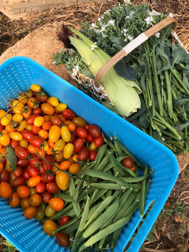 Từ bỏ chức vụ hiệu trưởng để theo đuổi công việc trồng rau trên Đà Lạt, cô chủ The Liittle Pine: Làm nông cũng như làm giáo dục  - Ảnh 14.