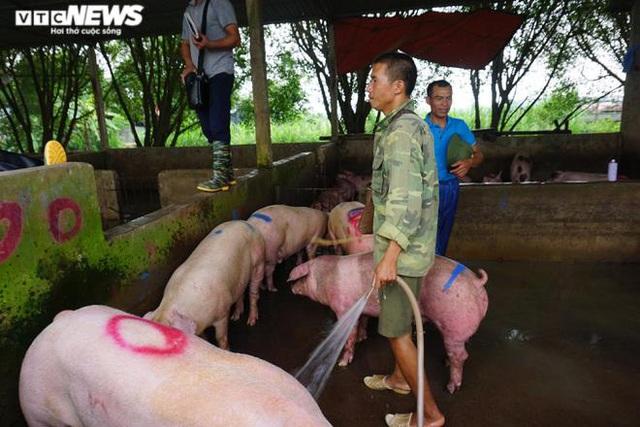 Giá lợn hơi tăng cao kỷ lục, người nuôi vẫn không muốn bán - Ảnh 1.