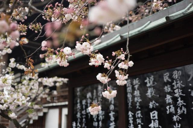 Ichigo Ichie - Nhất kì nhất hội: Triết lý sống đem lại hạnh phúc của người Nhật Bản, mỗi khoảnh khắc trôi qua chính là một kho báu quý giá - Ảnh 4.