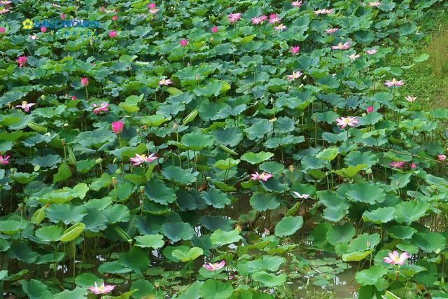 Khám phá lịch trình du lịch Việt Nam từ giờ đến cuối năm, các chị em hãy đi ngay để biết nước mình đẹp thế nào! - Ảnh 15.