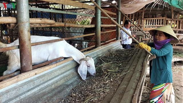 Thu nhập hàng trăm triệu đồng từ mô hình nuôi dê giống và dê thương phẩm - Ảnh 2.
