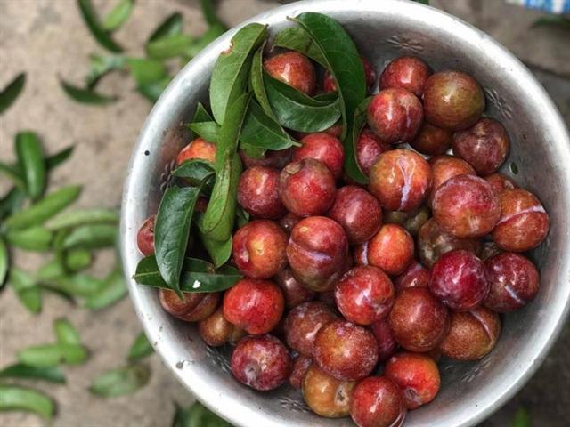 Mận là loại trái cây cực tốt nhưng có những người tốt nhất không nên ăn, đặc biệt là 5 đối tượng này - Ảnh 3.