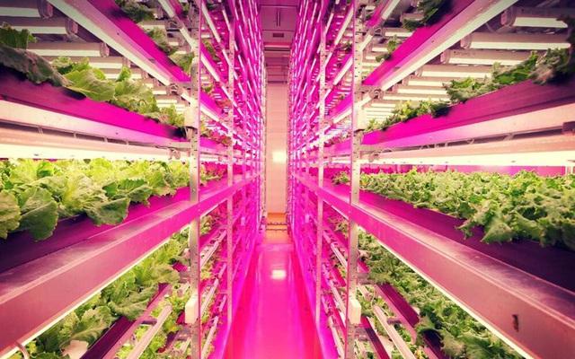 Ngắm những vườn rau khổng lồ ở... trong nhà - Ảnh 2.