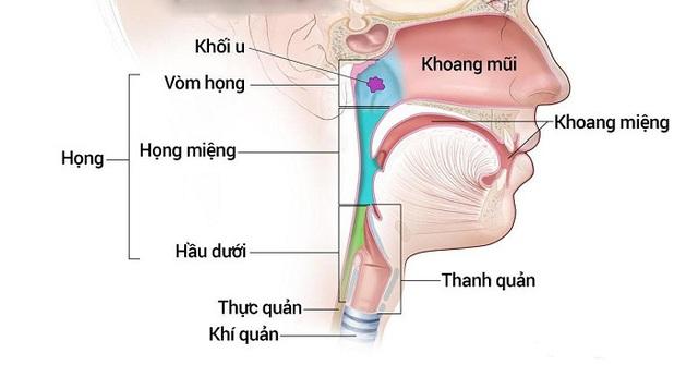 Mách bạn một số dấu hiệu cảnh báo ung thư tai mũi họng - Ảnh 1.