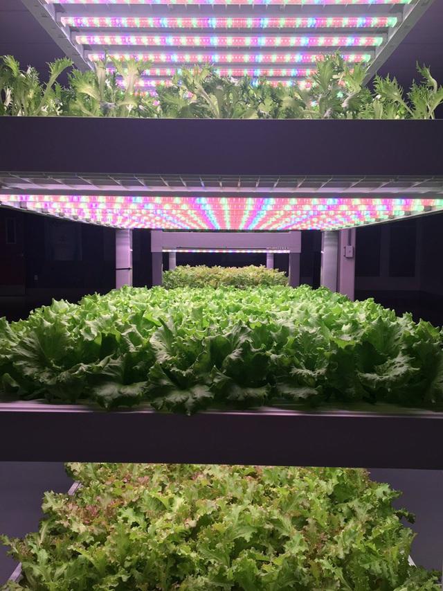 Ngắm những vườn rau khổng lồ ở... trong nhà - Ảnh 8.
