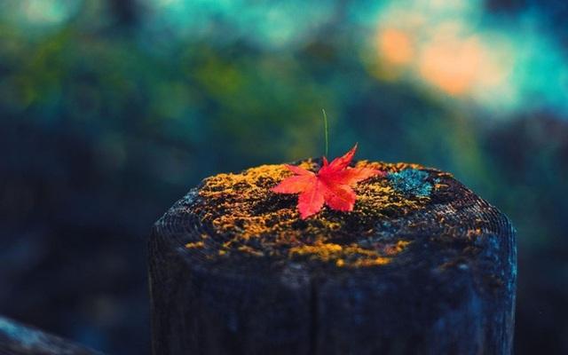 19 câu nói truyền cảm hứng tuyệt vời của Lý Tiểu Long: Để thành công rực rỡ hãy làm điều cuối cùng - Ảnh 1.