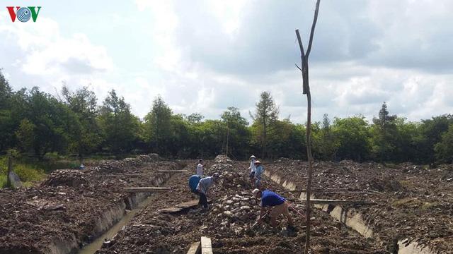 Nhà vườn xót xa khi thành quả lao động bị tiêu tan vì hạn mặn - Ảnh 2.