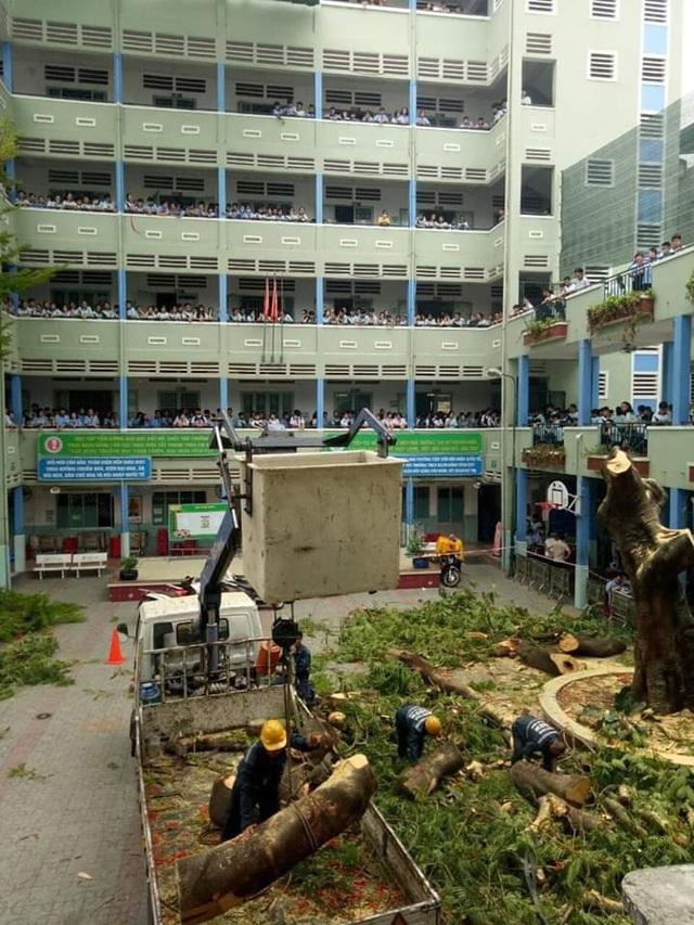 [ẢNH] Toàn cảnh vụ cây phượng bật gốc, đè 13 học sinh thương vong trong 5 giây ở sân trường - Ảnh 11.