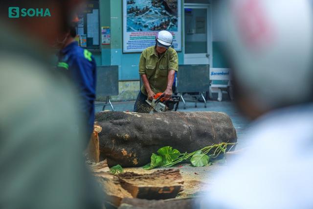 [ẢNH] Toàn cảnh vụ cây phượng bật gốc, đè 13 học sinh thương vong trong 5 giây ở sân trường - Ảnh 7.