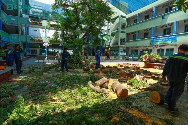 [ẢNH] Toàn cảnh vụ cây phượng bật gốc, đè 13 học sinh thương vong trong 5 giây ở sân trường - Ảnh 8.