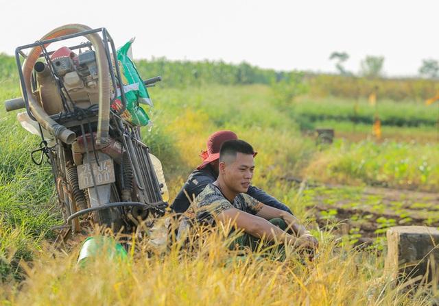 Flycam: Trên cánh đồng rau bạc trắng, người nông dân khóc ròng vì mất trắng vụ thu hoạch do sâu tơ phá hoại - Ảnh 13.