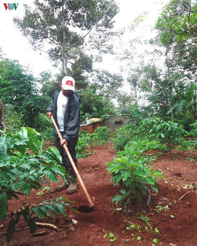Đắk Lắk: Đa canh cây trồng trong vườn cà phê thích ứng với biến đổi khí hậu - Ảnh 2.