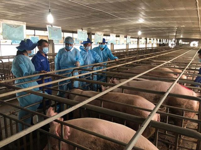 Cuối năm nay, sản lượng thịt heo sẽ cao kỷ lục - Ảnh 1.