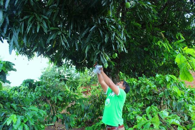 Độc lạ các loại trái cây rừng tràn xuống phố - Ảnh 5.