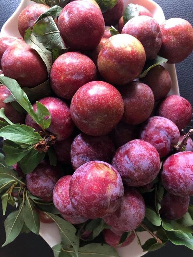 Mận đồi Pu Nhi ngọt như cherry, giá đắt ngang nho Mỹ vẫn cháy hàng - Ảnh 3.