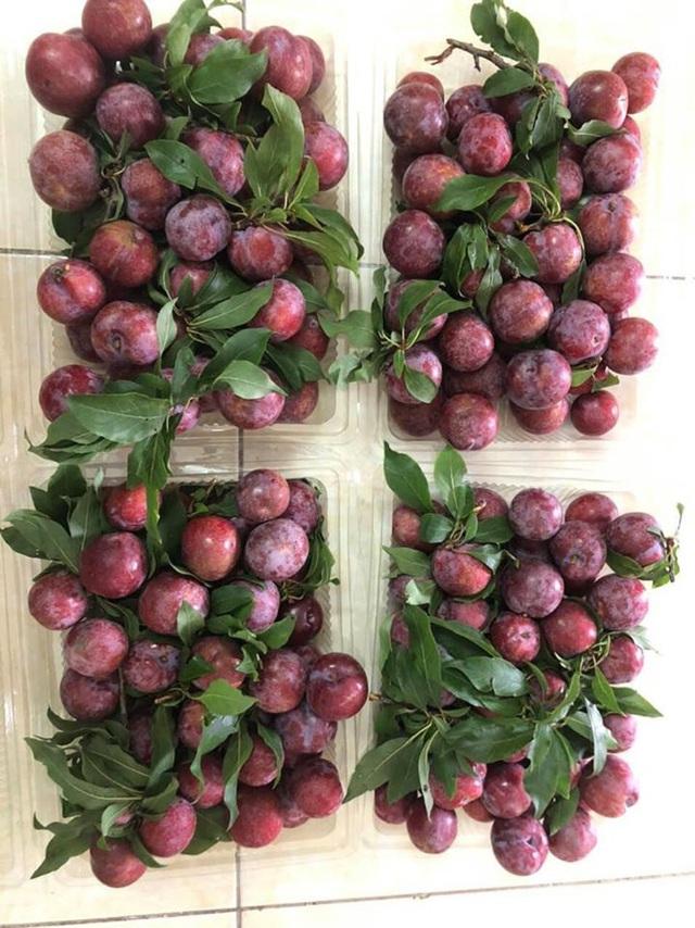 Mận đồi Pu Nhi ngọt như cherry, giá đắt ngang nho Mỹ vẫn cháy hàng - Ảnh 7.