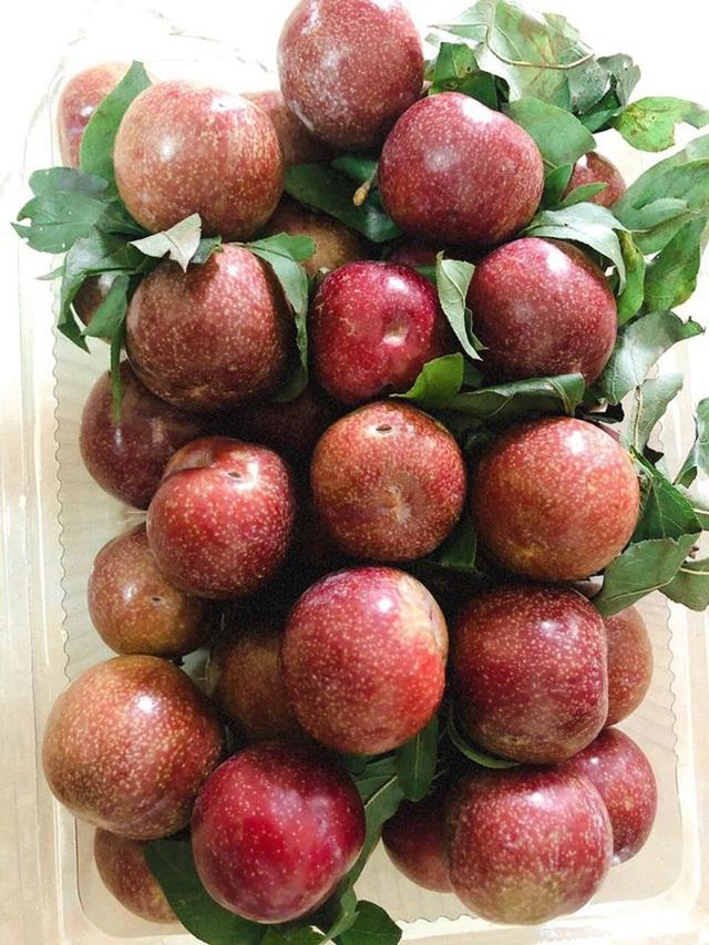 Mận đồi Pu Nhi ngọt như cherry, giá đắt ngang nho Mỹ vẫn cháy hàng - Ảnh 10.