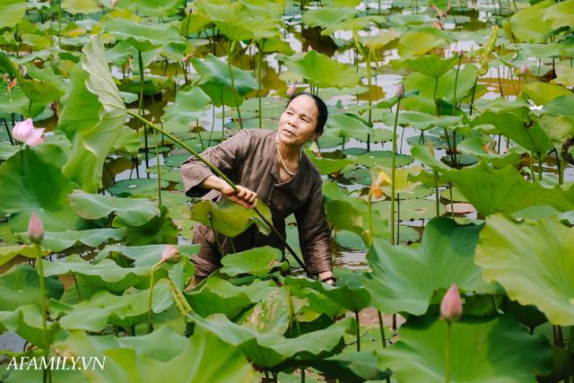 Người phụ nữ chân quê ngoại thành Hà Nội với biệt tài bắt sen nhả tơ, làm nên chiếc khăn giá chẳng kém gì hàng hiệu nổi tiếng - Ảnh 1.