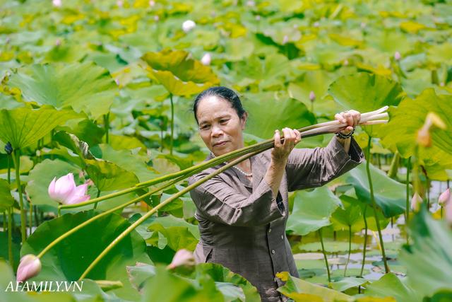 Người phụ nữ chân quê ngoại thành Hà Nội với biệt tài bắt sen nhả tơ, làm nên chiếc khăn giá chẳng kém gì hàng hiệu nổi tiếng - Ảnh 2.