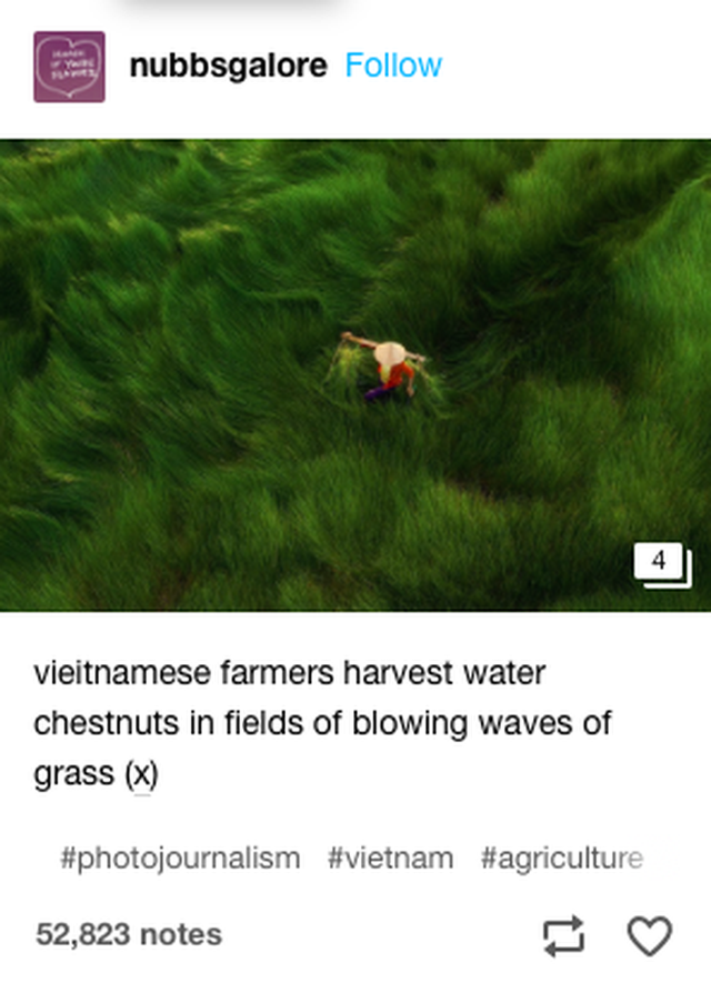 """Bộ ảnh đồng cỏ Việt Nam """"lượn sóng"""" đang gây bão mạng quốc tế, nhưng cả ngàn người nước ngoài lại bị nhầm lẫn ở một điểm này - Ảnh 1."""