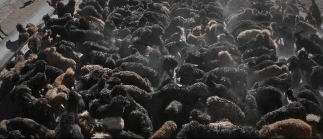 Câu chuyện buồn về cơn sốt chó ngao Tây Tạng: Từ thần khuyển chục tỷ đồng đến bầy chó hoang hàng vạn con bị ruồng bỏ - Ảnh 5.