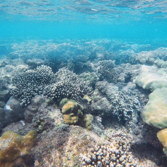 6 vùng biển lặn ngắm san hô đẹp nhất Việt Nam: Rực rỡ đến mê đắm lòng người - Ảnh 3.