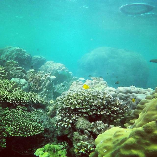 6 vùng biển lặn ngắm san hô đẹp nhất Việt Nam: Rực rỡ đến mê đắm lòng người - Ảnh 2.