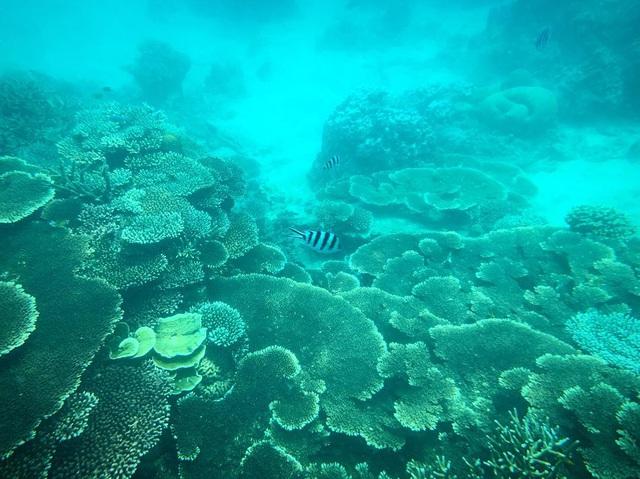 6 vùng biển lặn ngắm san hô đẹp nhất Việt Nam: Rực rỡ đến mê đắm lòng người - Ảnh 5.