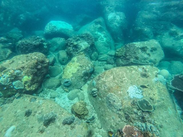 6 vùng biển lặn ngắm san hô đẹp nhất Việt Nam: Rực rỡ đến mê đắm lòng người - Ảnh 14.
